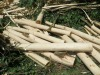 Timber Acacia, less than 14cm diameter, Cheap price