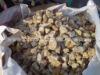 Yellow Stone Chips